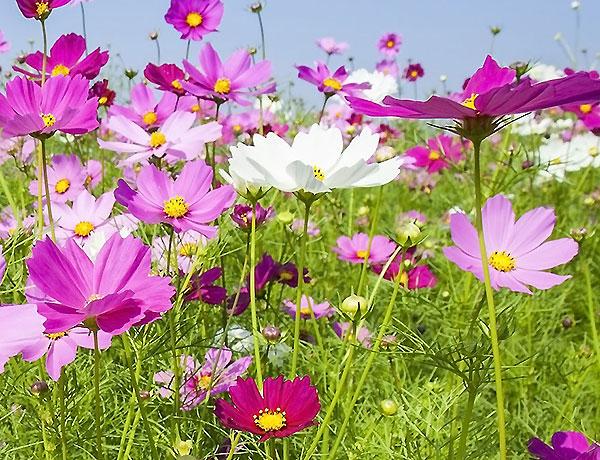 Urban Pollinator Seed mixes