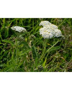 Mixed Herbs For Horses