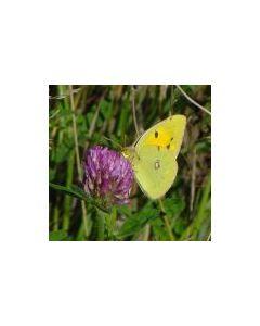 Butterfly Wildflower Border