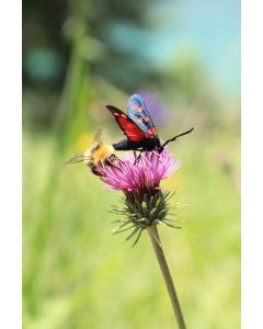 Bees & Butterflies Wildflower Meadow
