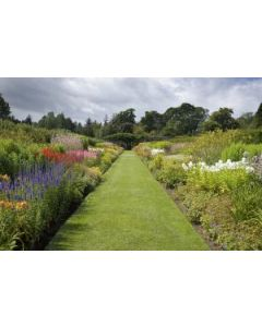Quality Seed Mix For A Family Lawn