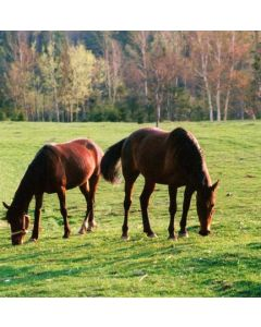 Natural Horsemanship Long Term Grazing Ley