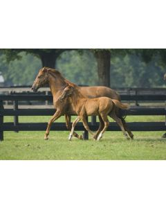 Grass Seed For Horse Gallops