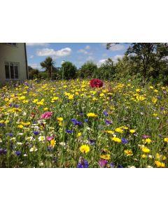 Instant Sunshine Mini Wildflower Meadow