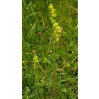 Wild Flower Mix For Horse Fields   25 Grams