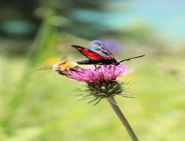 Beautiful Wildflower Meadows