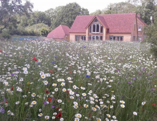 Cornfield Annual Meadow 2014