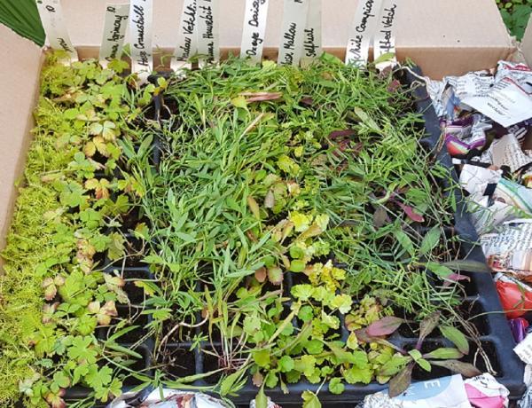 What do Wildflower Plug Plants look like