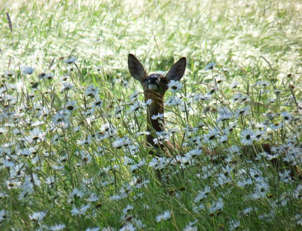 Sowing Wildflower Seeds into Grass