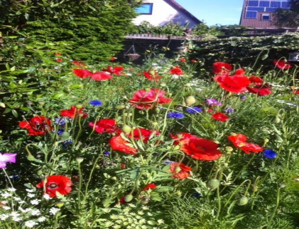 Scottish Wildflower Meadow