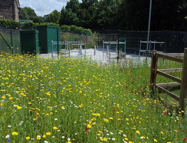 Wildflower seed in Cornwall