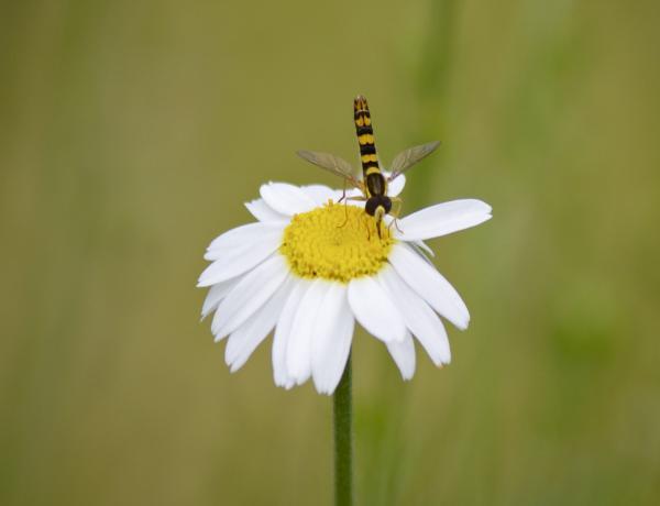 Wildlife on Wild flowers