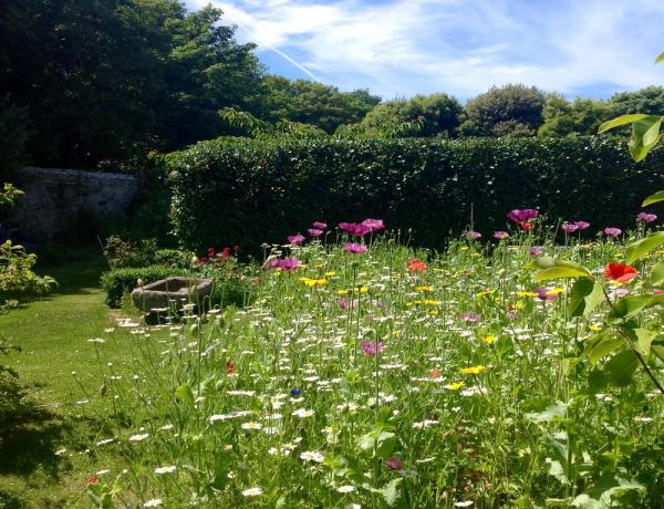 Wild flower and Opium Poppies