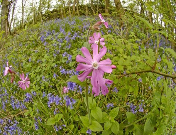 Annuals, Biennials & Perennials Wild Flowers