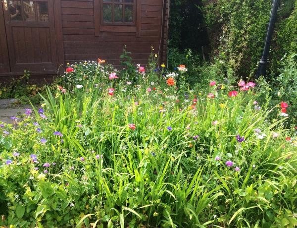 Small Wildflower Garden