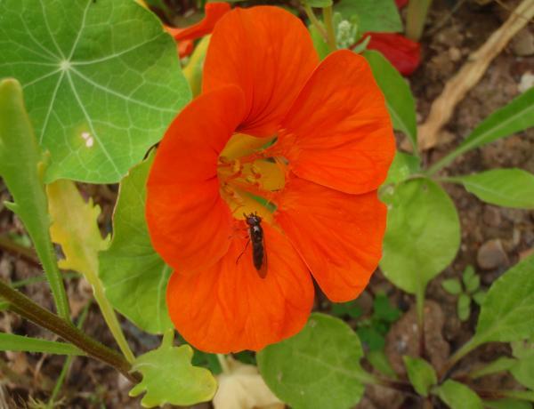 Small wild flower meadow in small garden