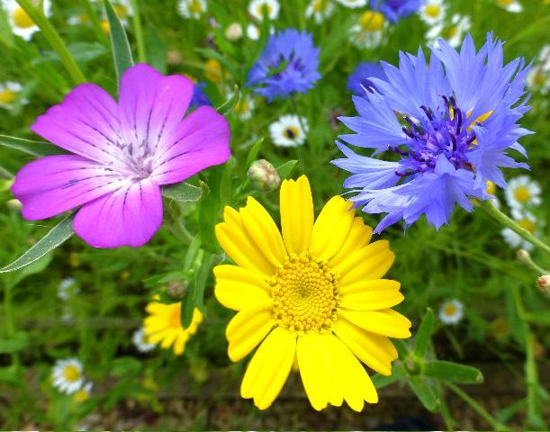Annuals Versus Perennials