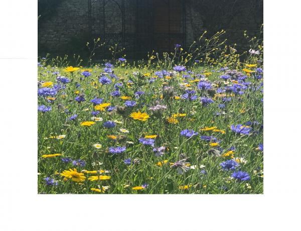Wildflowers & Weddings