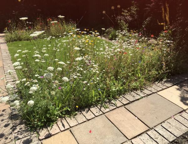 Small Wild Flower Borders