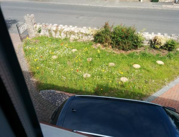 Instant Sunshine mini meadow