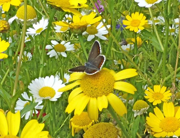 When to plant wildflower seeds.