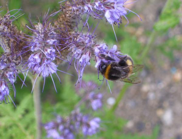 More Wildlife in wild flower meadow