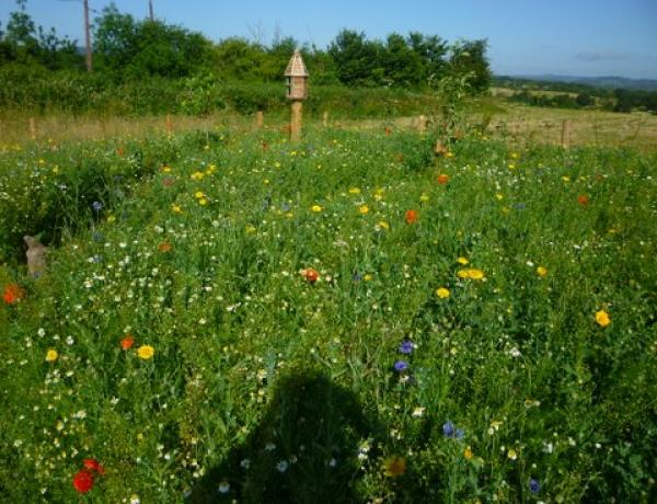 large wild flower meadow with paths