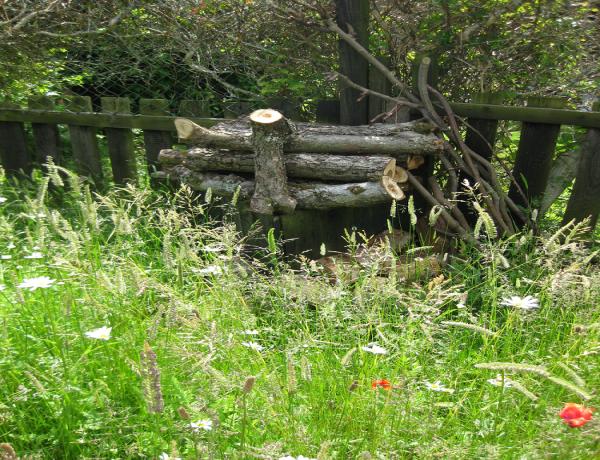 Wild Flower Meadow in its 2nd Year