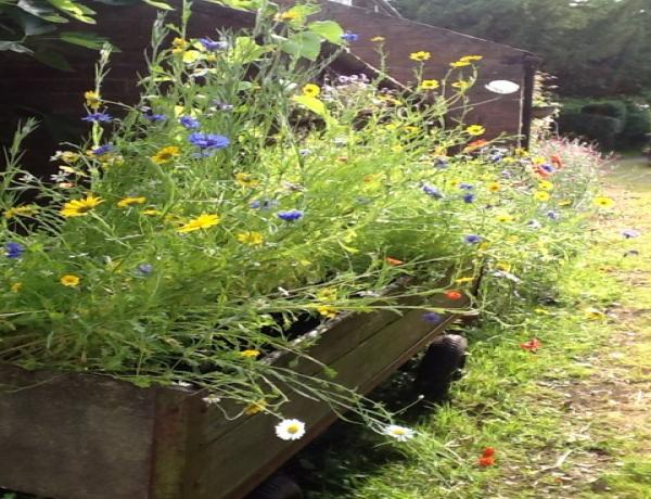 A small wildflower garden in old wooden box