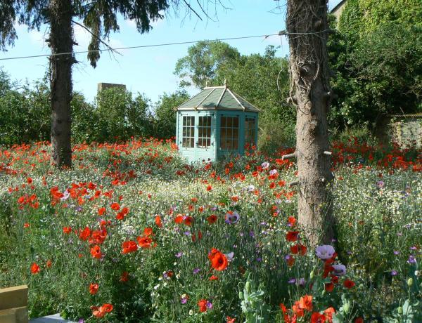 Wild Flower Meadows; Establishment