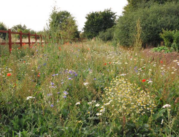 A wild wild flower meadow