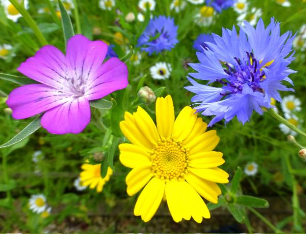 Would You like some Sunshine in your Garden this year?