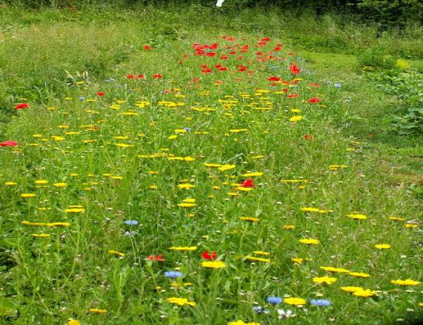 Creation of  a wild flower meadow in 2010