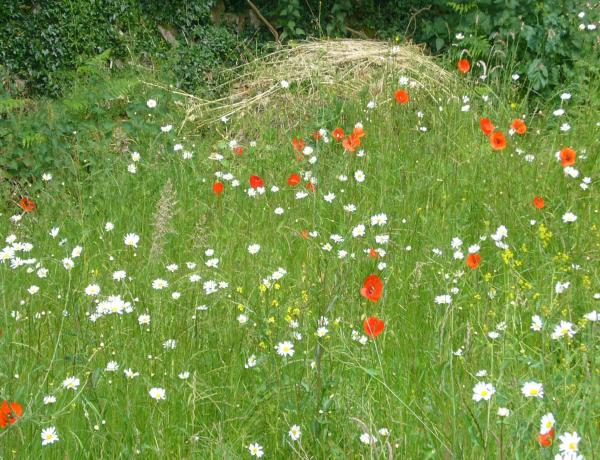 First year of a meadow in 2010