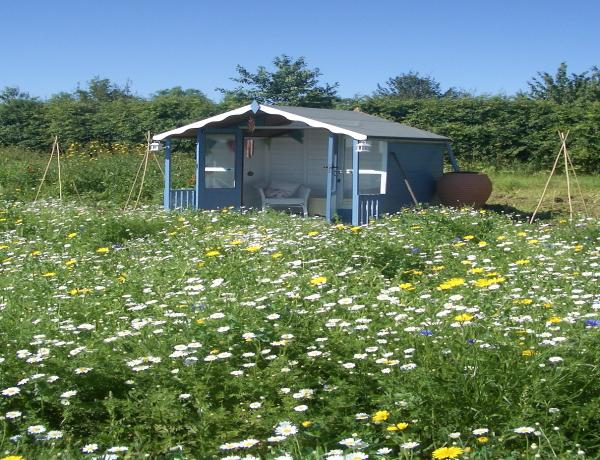What are wild flower meadows for?