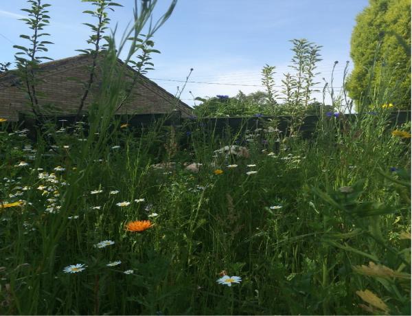 2016 wild flower meadows
